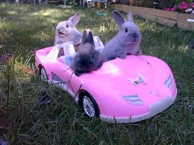 Why did the Easter Bunny cross the road?-bunnies_driving_400x300.jpg